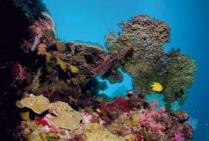 ต้นกัลปังหา วิถีแห่งความงามใต้ท้องทะเล