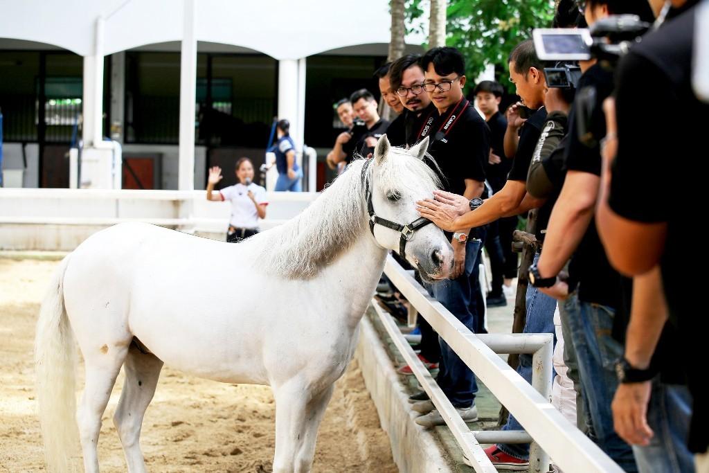 10. สื่อมวลชนเดินทางถึงสโมสรกีฬาขี่ม้าโกลด์เด้นฮอร์สไรดิ้งคลับ