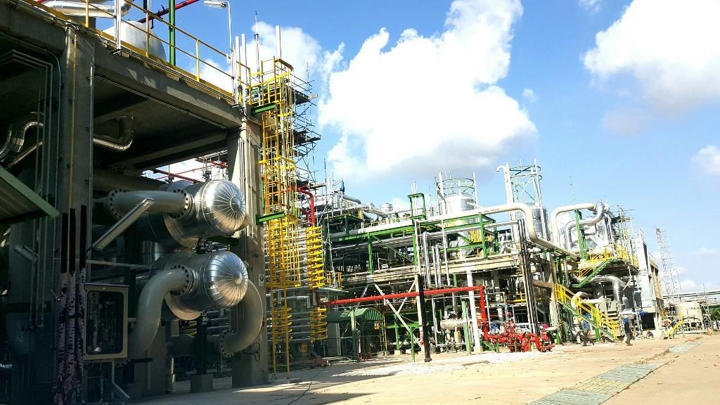 TPE Plant2 (Large)
