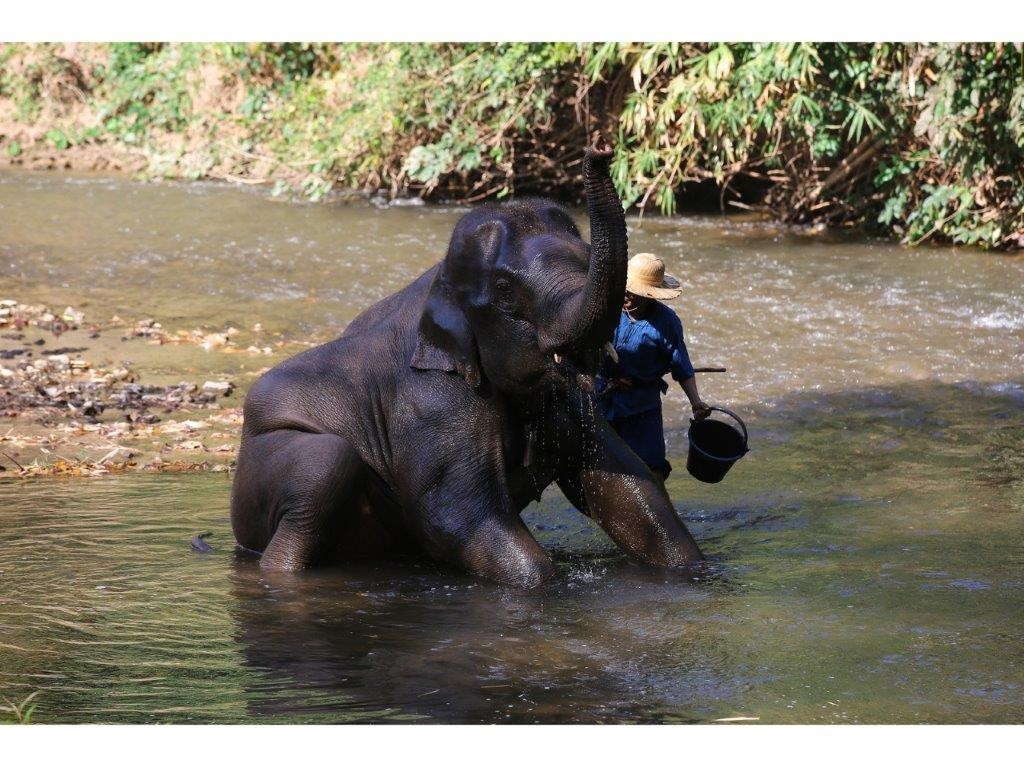 36.ปางช้างเชียงดาว - อาบน้ำช้าง
